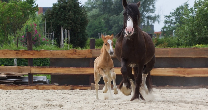 De Bonte Belevenis Assendelft.Pony S De Bonte Belevenis